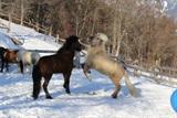 Winter & Impressionen